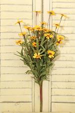 Daisy Bush - Yellow