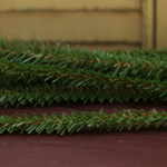 Canadian Pine Stems