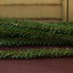 Canadian Pine Stems